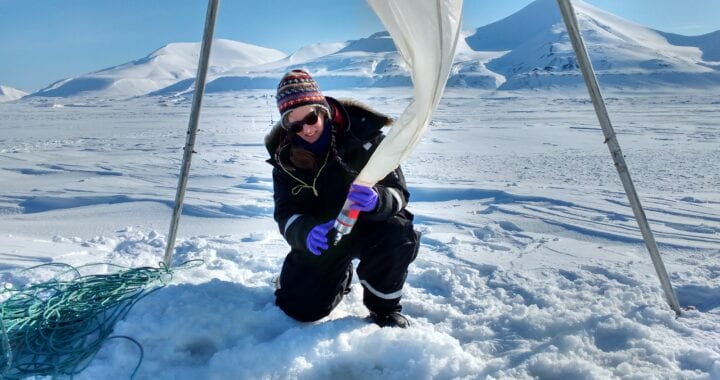 Under-ice phytoplankton: The overlooked part of the Arctic carbon cycle